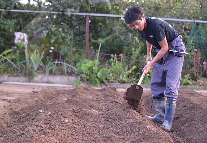 一平の作る畝