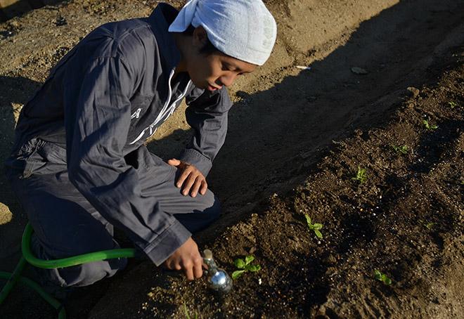 苗の横に散水ノズルをもっていく。