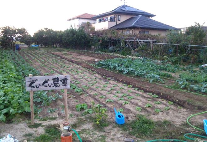 碧南のぐいぐい農園