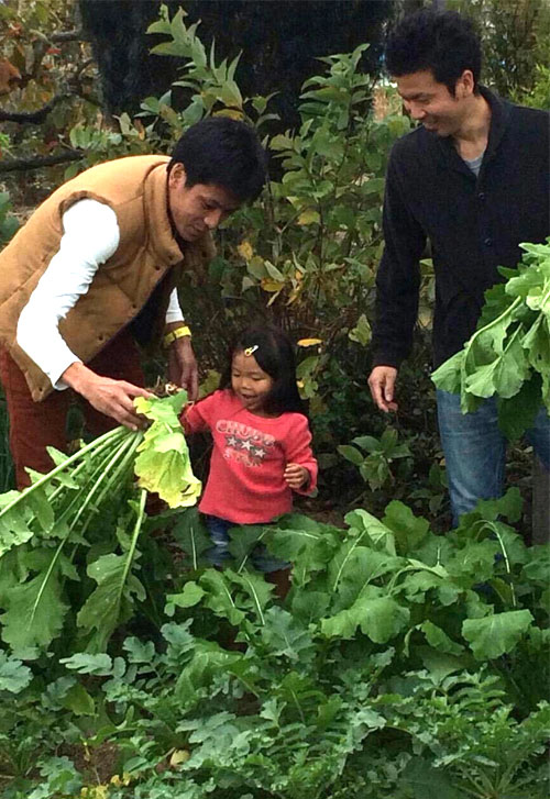 子供達の収穫体験