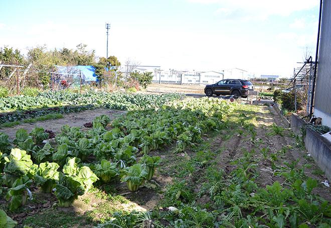 新年のぐいぐい農園