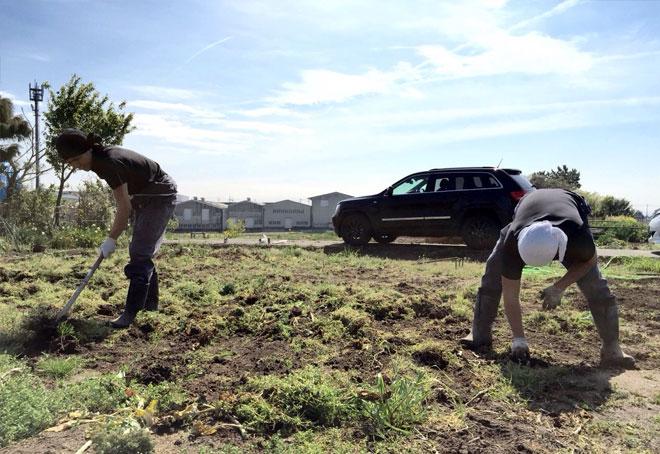 農園の草取り