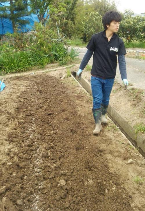 畝に穴を30cm間隔であけました