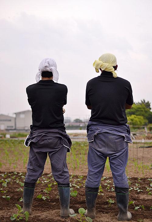 よしろーと二人で農作業