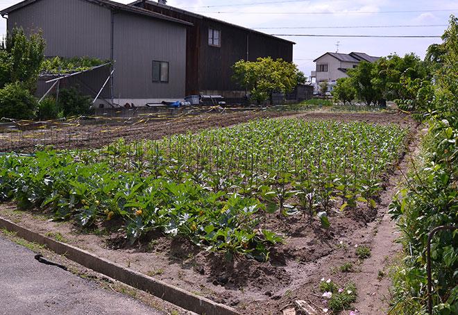 5月のぐいぐい農園