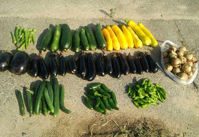 今年一番の収穫量!