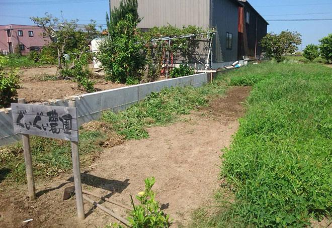 落花生の収穫と草取り