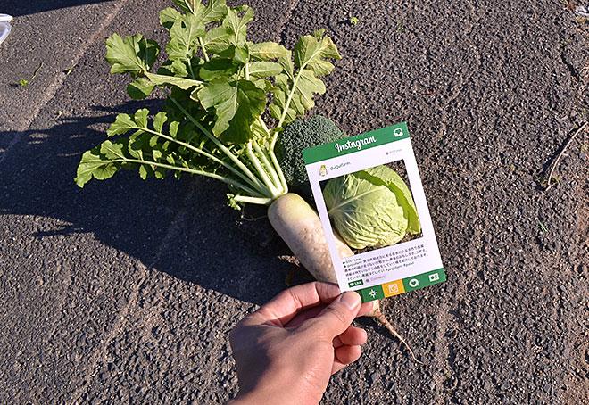 立派に成長したぐいぐい農園の野菜