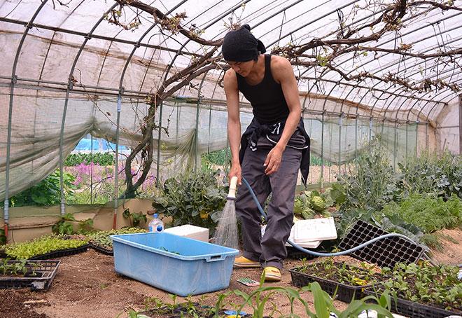 移植完了した苗に水をたっぷりあげます。