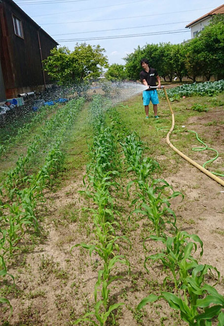 水もたっぷり与えていきます♪みずみずしく育って欲しいですからね♪